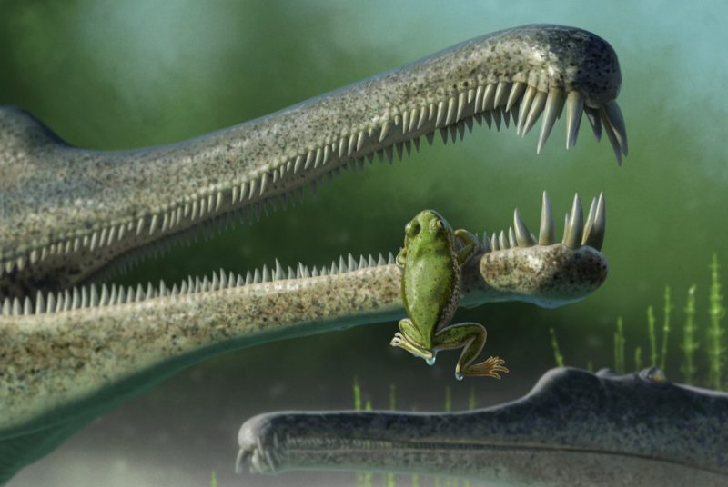 artist rendition of triassic frog with phytosaur