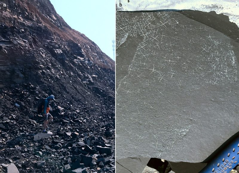 Tang at quarry in South China (left) with abundant sponge spicules (right)